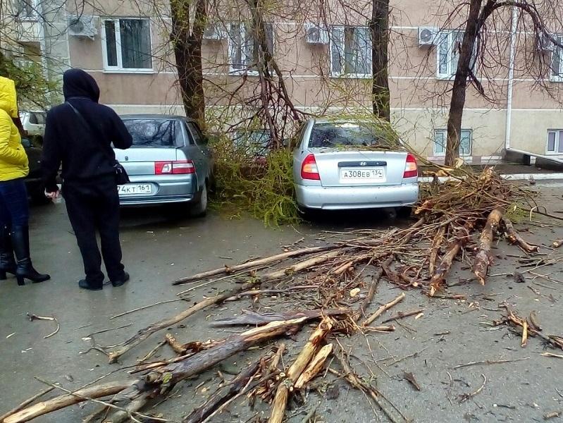 Рухнувшее под напором бури дерево побило автомобиль на Степной