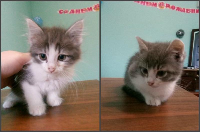 Крошечные котята с грустными глазами в мороз остались на улице в картонной коробке