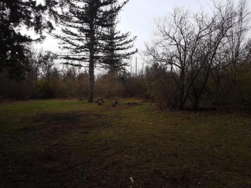 37 лет назад в Волгодонске осудили двух мужчин, спиливших канадские ели в дендропарке