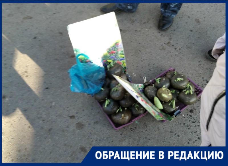 Предприимчивая цыганка выдавала капусту за чудо-растение в поселке Зимовники