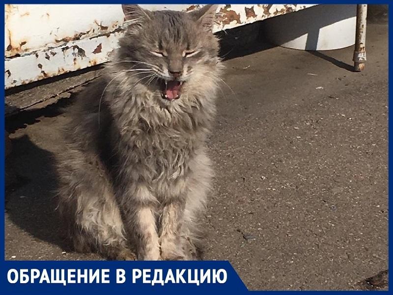 На рынке «Солнышко» в Волгодонске потравили котов,- волгодончанка