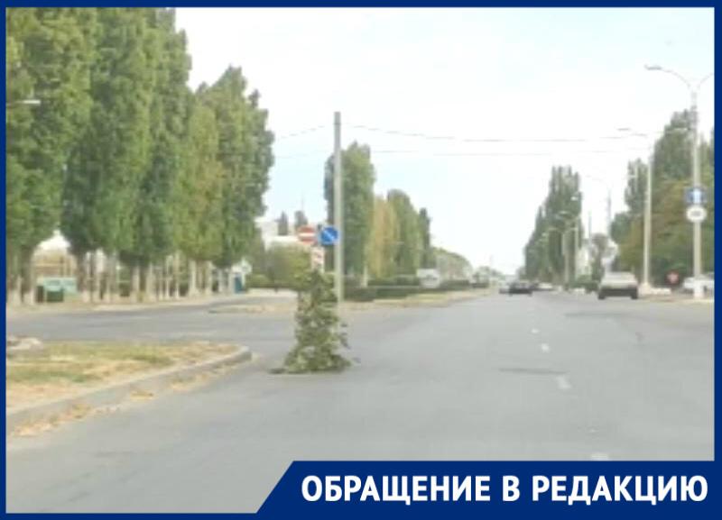 На месте открытого люка на Гагарина «выросло» дерево