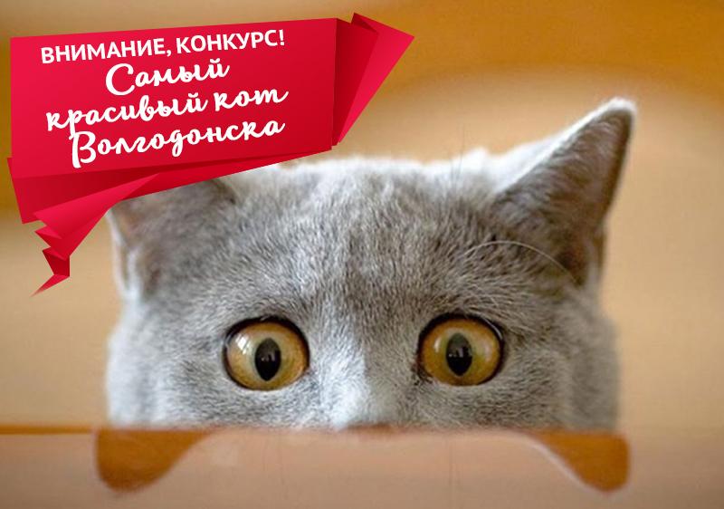Стартует конкурс «Самый красивый кот Волгодонска-2018»