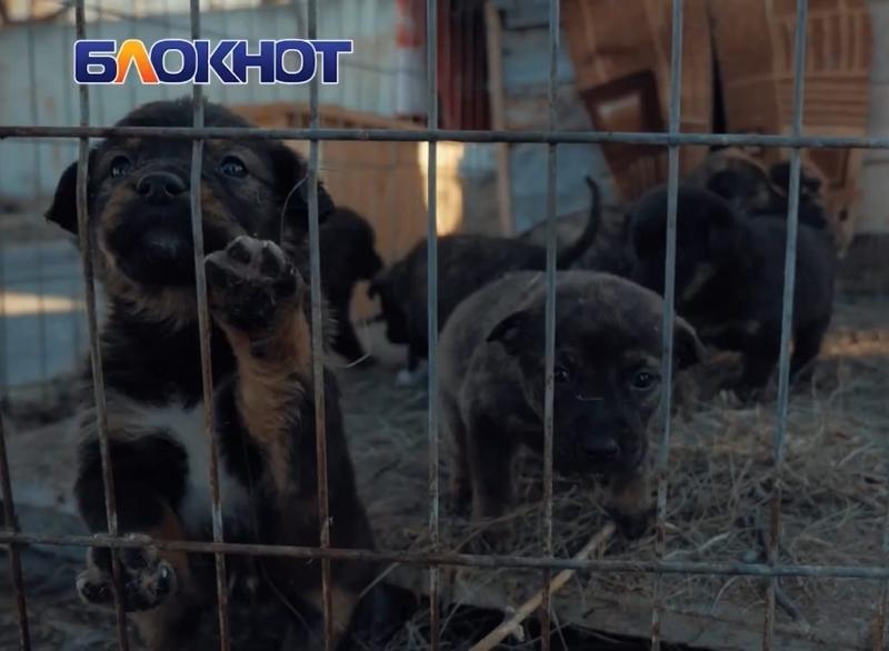 Оставшиеся без мамы щенки тигрового окраса мечтают о семье и заботе