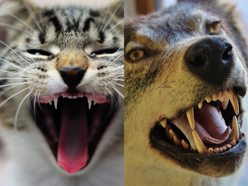 Кошки и собаки покусали одинаковое количество волгодонцев