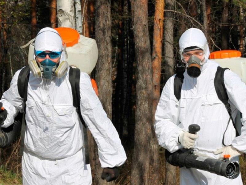 В Волгодонске в три раза снизилась стоимость борьбы с клещами и комарами
