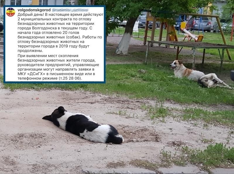 Администрация Волгодонска прокомментировала ситуацию с отловом бездомных животных