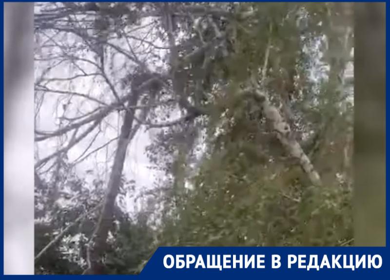 Повисшее бревно может упасть на чью-то голову, - жители переулка Макаренко