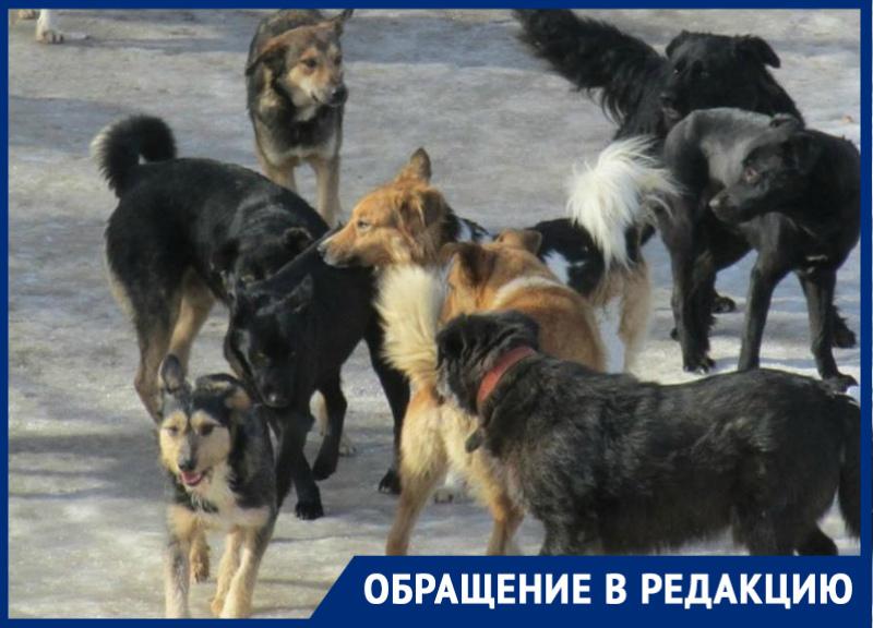 Свора бездомных собак безжалостно разорвали кошку в старой части Волгодонска