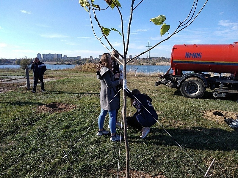 Волгодонцы смогут помочь выиграть городу аллею редких деревьев или уличный спорткомплекс