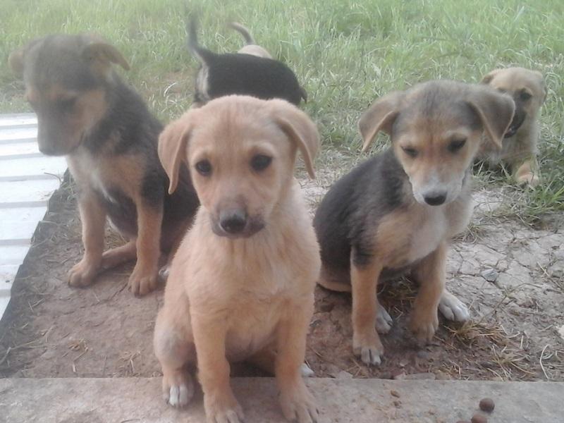В Волгодонске маленьким щенкам грозит полное истребление