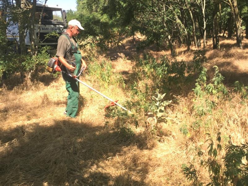 Свыше 700 кустов дикорастущей конопли были уничтожены в Волгодонске
