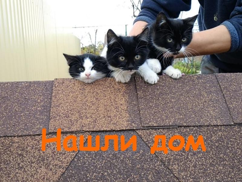 Котята с «маской Бэтмена» на мордочках ищут добрых хозяев