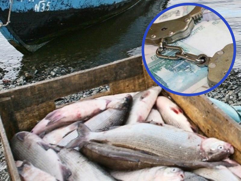 Более 300 тысяч рублей заплатят госинспекторы за вымогательство взяток с рыбодобытчиков