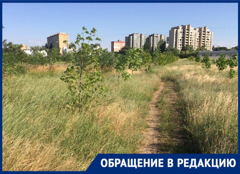 Высокая трава в парке «Молодежный» вызывает опасения у жителей Волгодонска