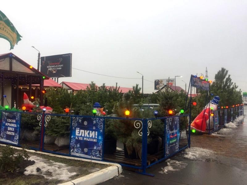 Где и за сколько можно будет купить елки в Волгодонске
