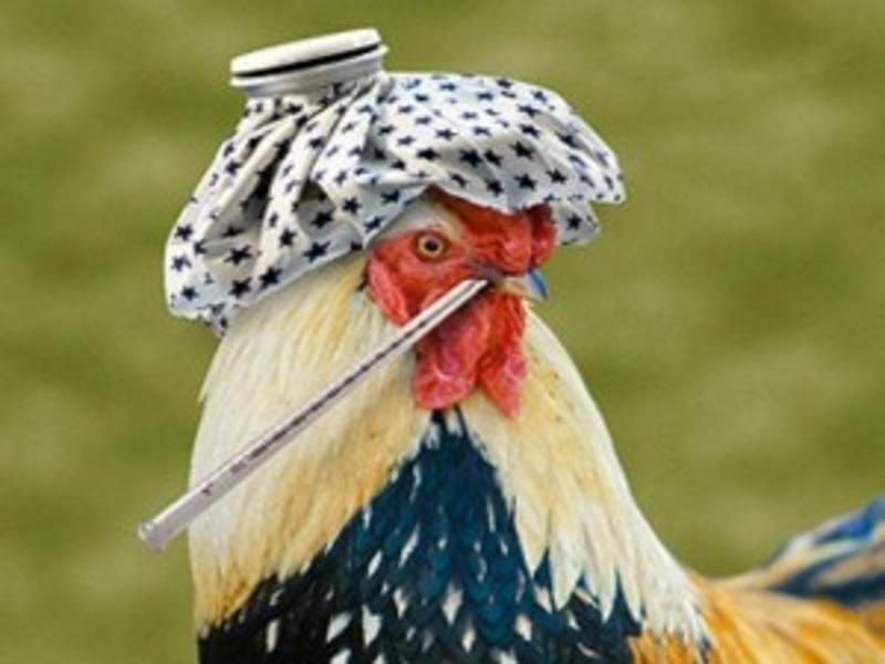В Волгодонске и близлежащих районах наступает сезон птичьего гриппа