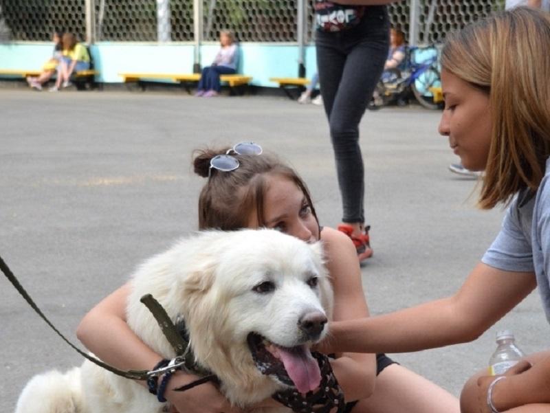 Волгодонцы  собрали более 15 тысяч рублей для бездомных животных