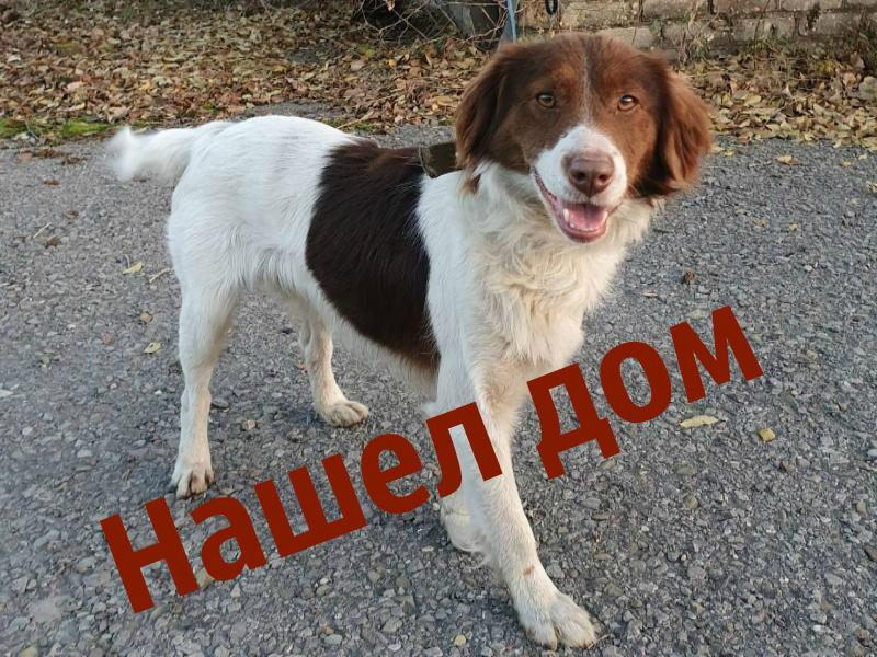 В поисках прежних хозяев несчастный пес Бруно больше месяца скитался по улицам Волгодонска