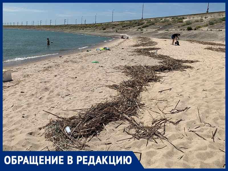 Тухлая рыба на пляже Цимлянска возмутила купальщиков