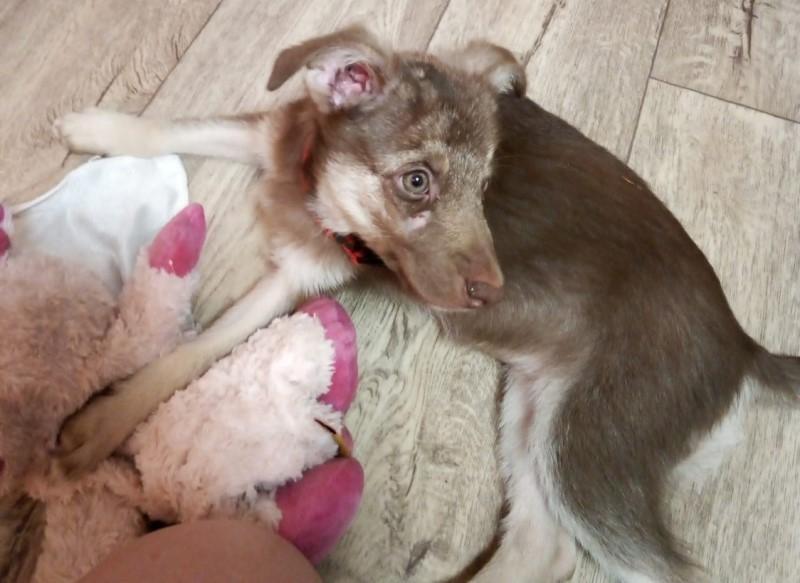 Бездомного щенка в Волгодонске чуть не разорвали другие бродячие крупные собаки