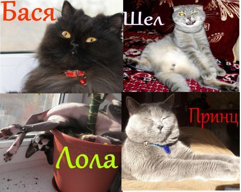 Город выбрал сразу двух «Самых красивых котов Волгодонска»