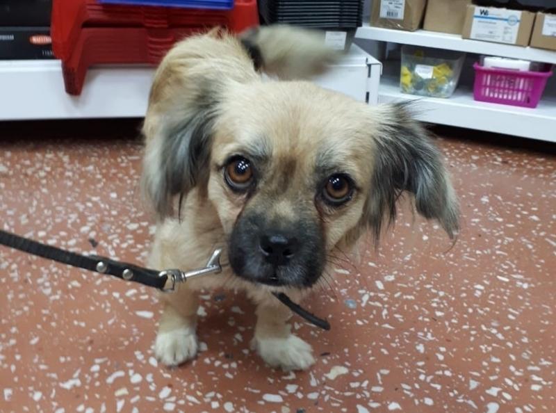 Исхудавшей и спасенной из отлова собаке ищут дом в Волгодонске
