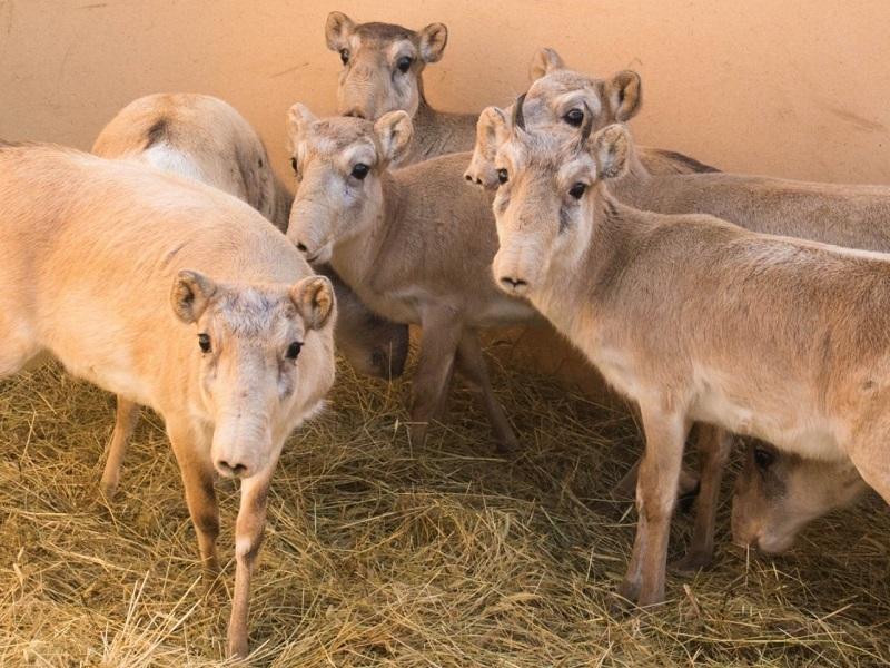 Современников мамонтов подготовили к жизни в степи в Орловском районе