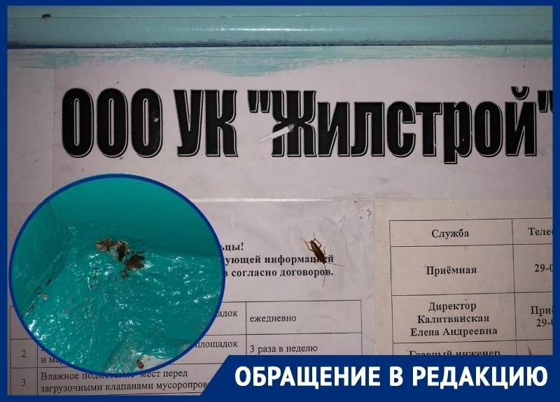Сотни тараканов атаковали МКД на улице Дружбы в Волгодонске