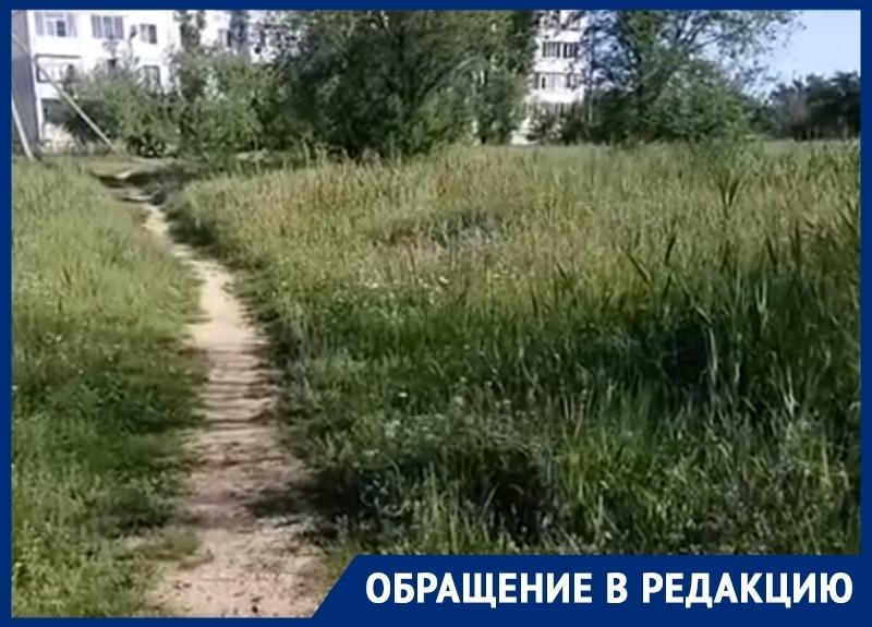 «Травы по колено»: волгодонцы просят покосить траву и убрать мусор в городе
