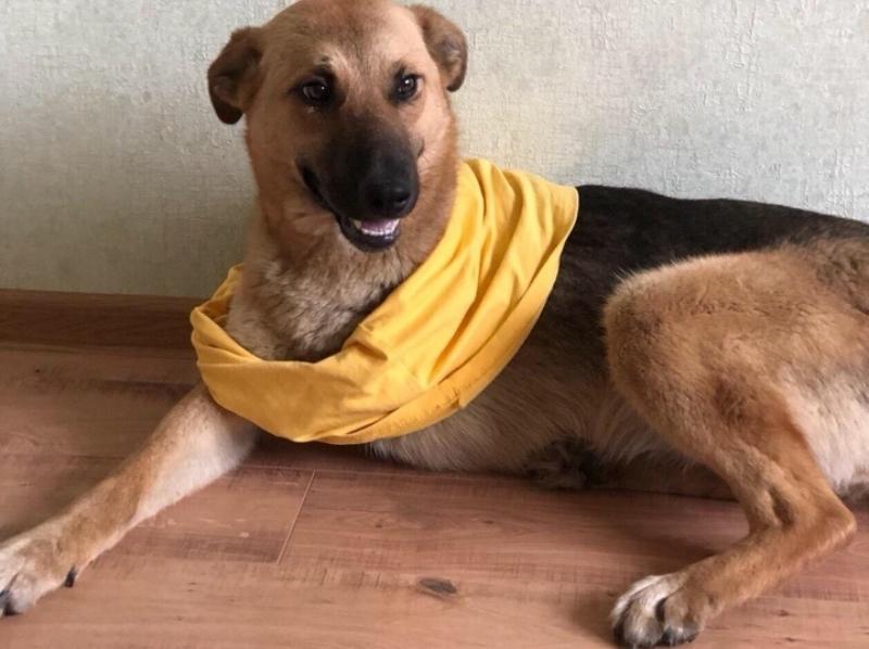 В Волгодонске спасли от гибели собаку без одной лапы