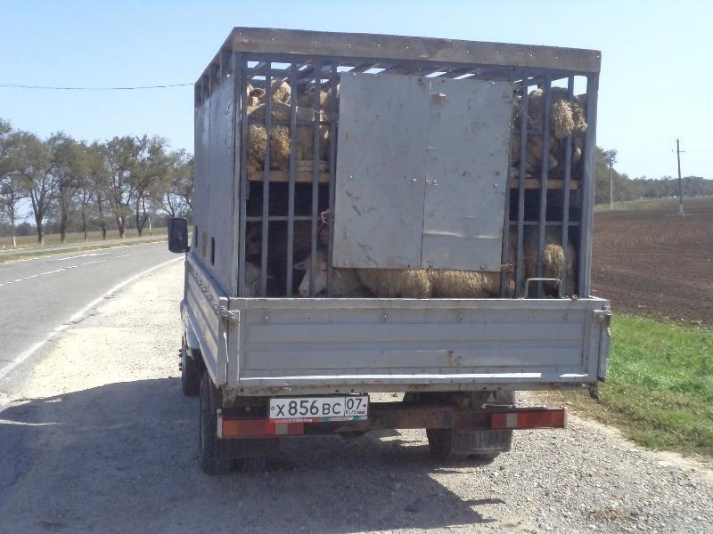 В Ремонтненском районе вор увез 72 овцы на «Газели»