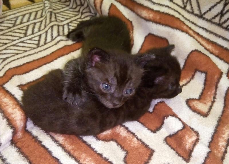 Волгодончанка завязала в пакете двух маленьких котят и выбросила их за налоговой
