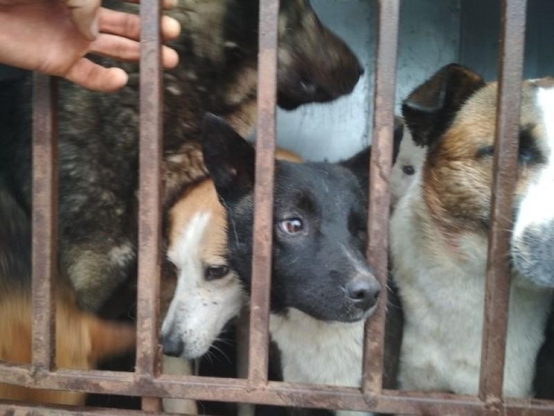 «Не выпускайте животных на самовыгул»: жителей Романовской предупредили об отлове