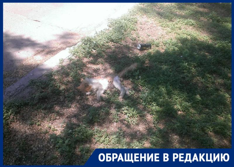 «Свора бездомных собак вновь разорвала бездомную кошку»: волгодончанка