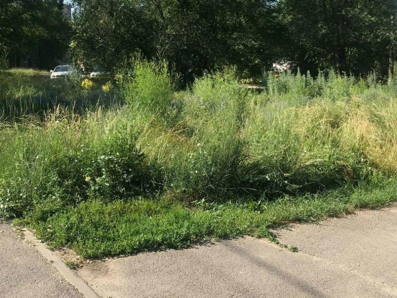 Администрация Волгодонска взяла под личный контроль ситуацию с покосом травы на территории города