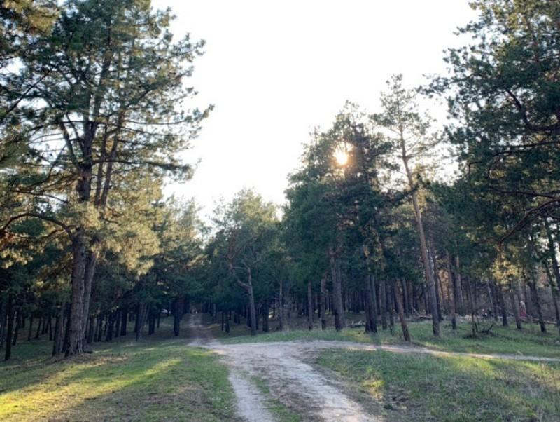 Из-за высокой пожароопасности волгодонцам запрещено отдыхать на территории лесных массивов