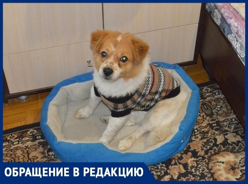 «Ротвейлер искусал нашего маленького пса»: волгодончанка рассказала о нападении на их собаку