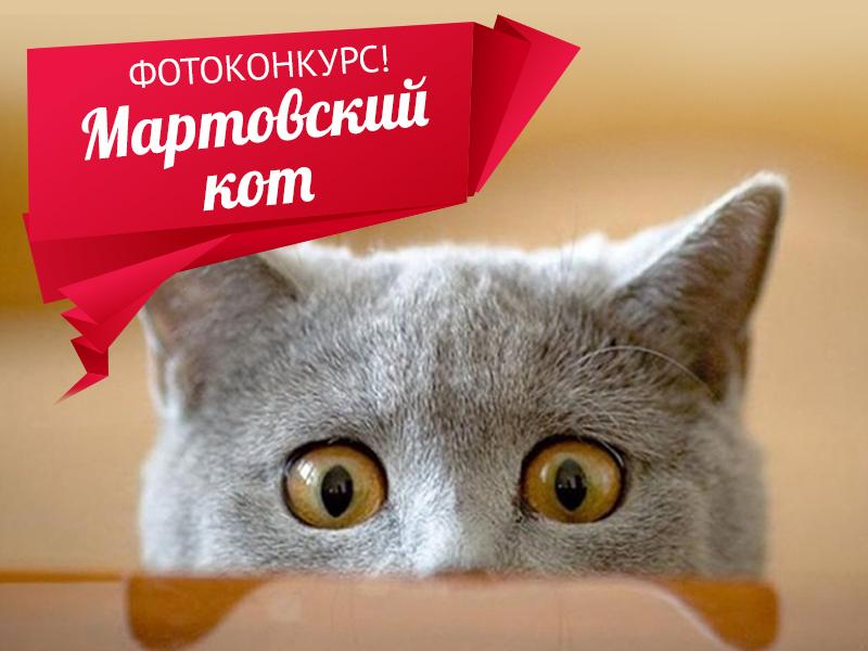 «Блокнот» запускает новый фотоконкурс - «Мартовский кот Волгодонска»