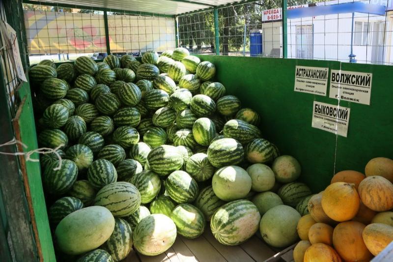 Где в Волгодонске можно купить дыни и арбузы