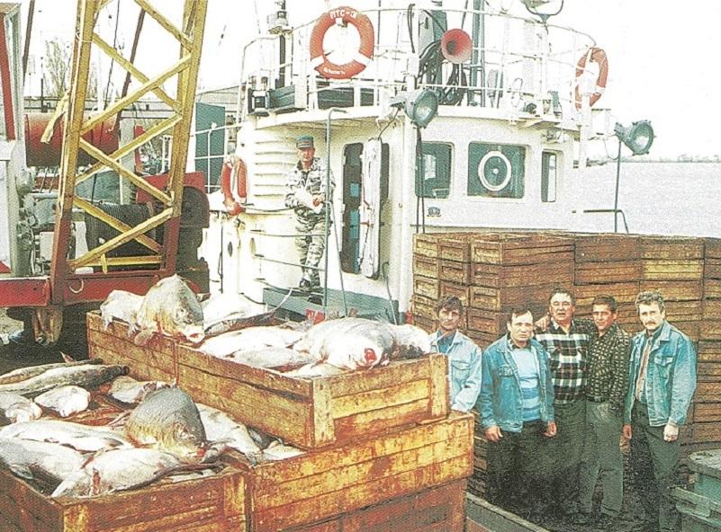 44 года назад в Волгодонске заработал рыбокомбинат у омута с сомами