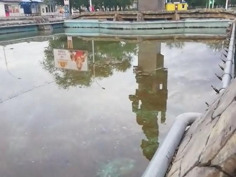 «Не фонтан, а болото с лягушками»: волгодонцы возмущены состоянием фонтана на Комсомольской площади