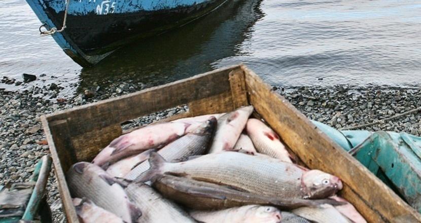 Браконьеры выловили более 300 штук рыбы из акваторий Цимлянского водохранилища и Сухо-Соленовского залива