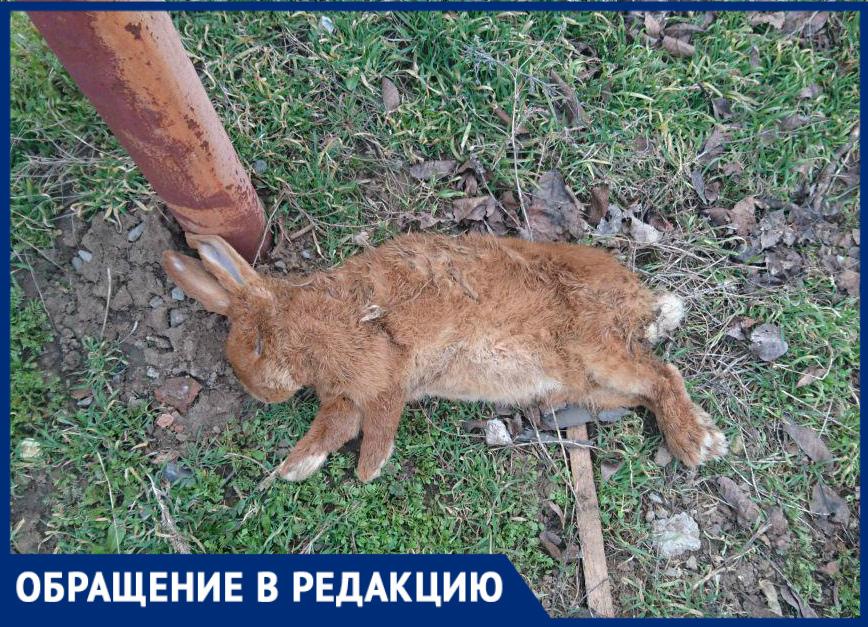 Стая бродячих собак напала на домашних животных в Старо-Соленом