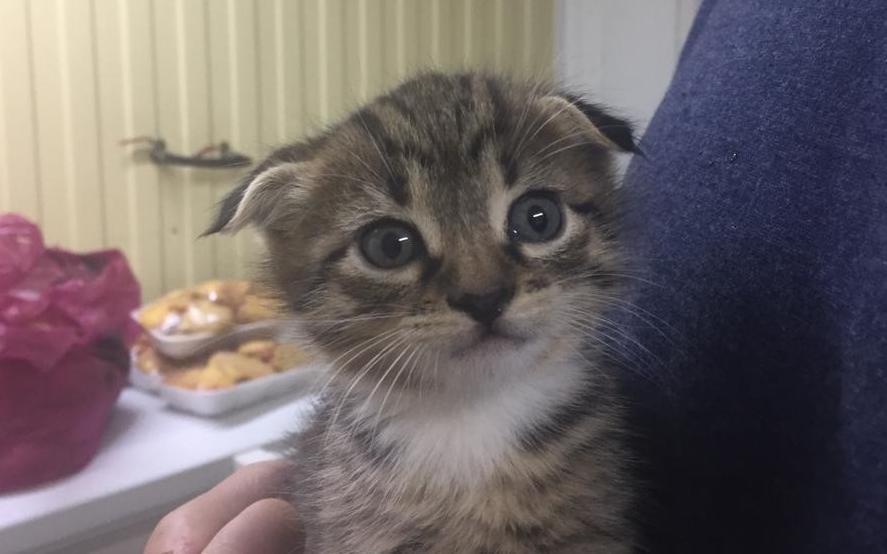 Очаровательные котята ищут заботливых хозяев
