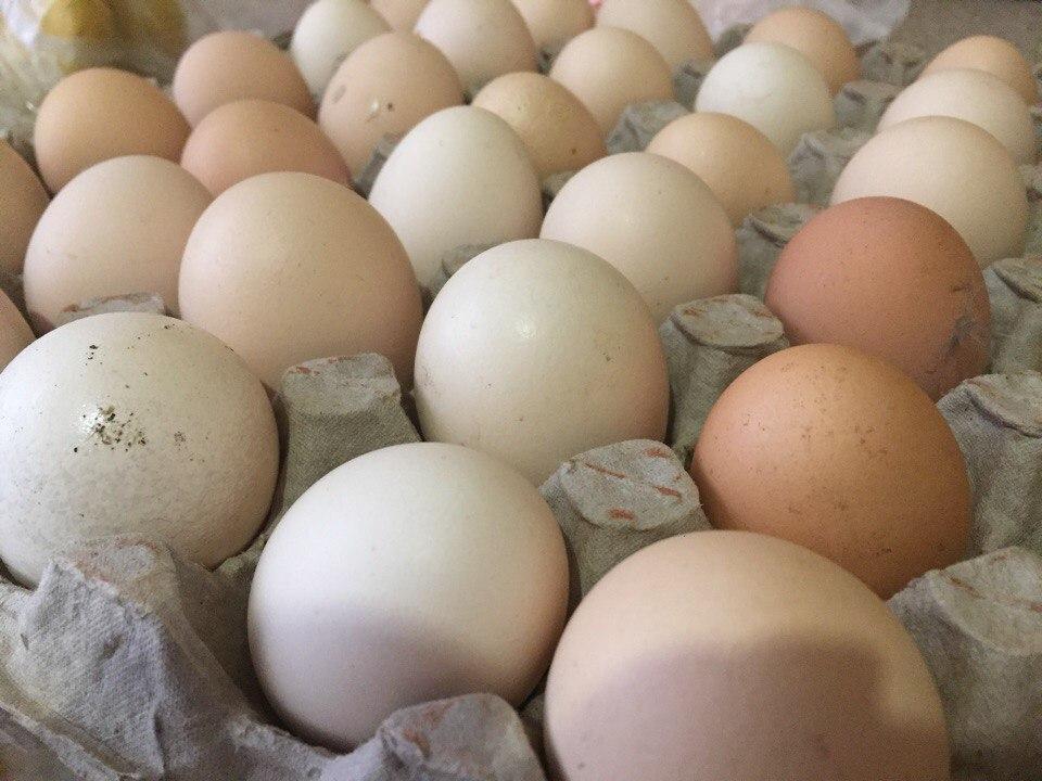 Волгодонцам разрешили съедать по два яйца в день