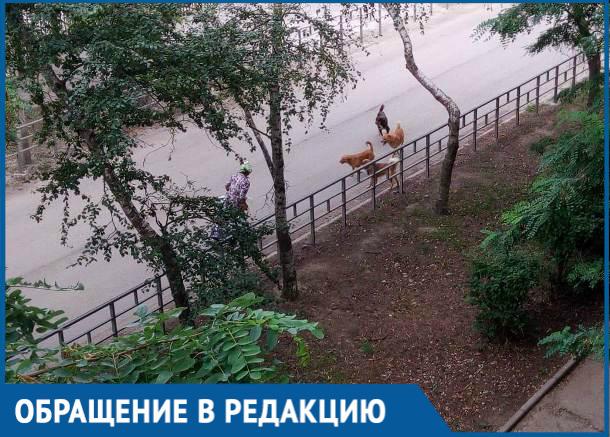 Стая бродячих собак держит в страхе жителей улицы на Пионерской