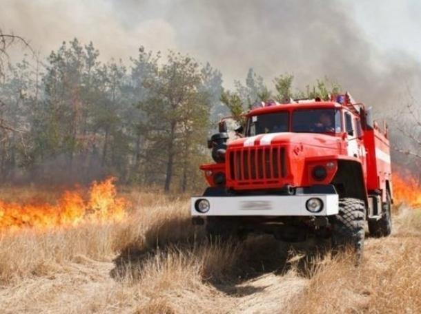 До конца июля жителям Волгодонского района запретили бывать в лесных массивах