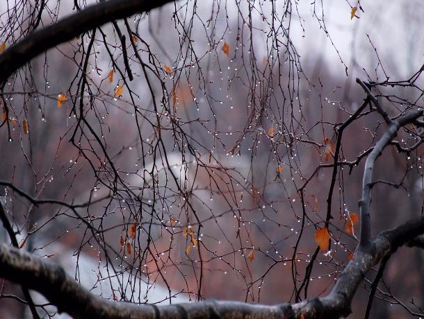 Перепады температуры и отсутствие осадков пообещали синоптики волгодонцам в пятницу