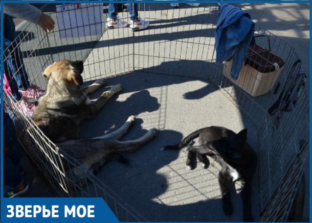 В Волгодонске состоялся фестиваль «Делай добро» по сбору помощи для бездомных животных